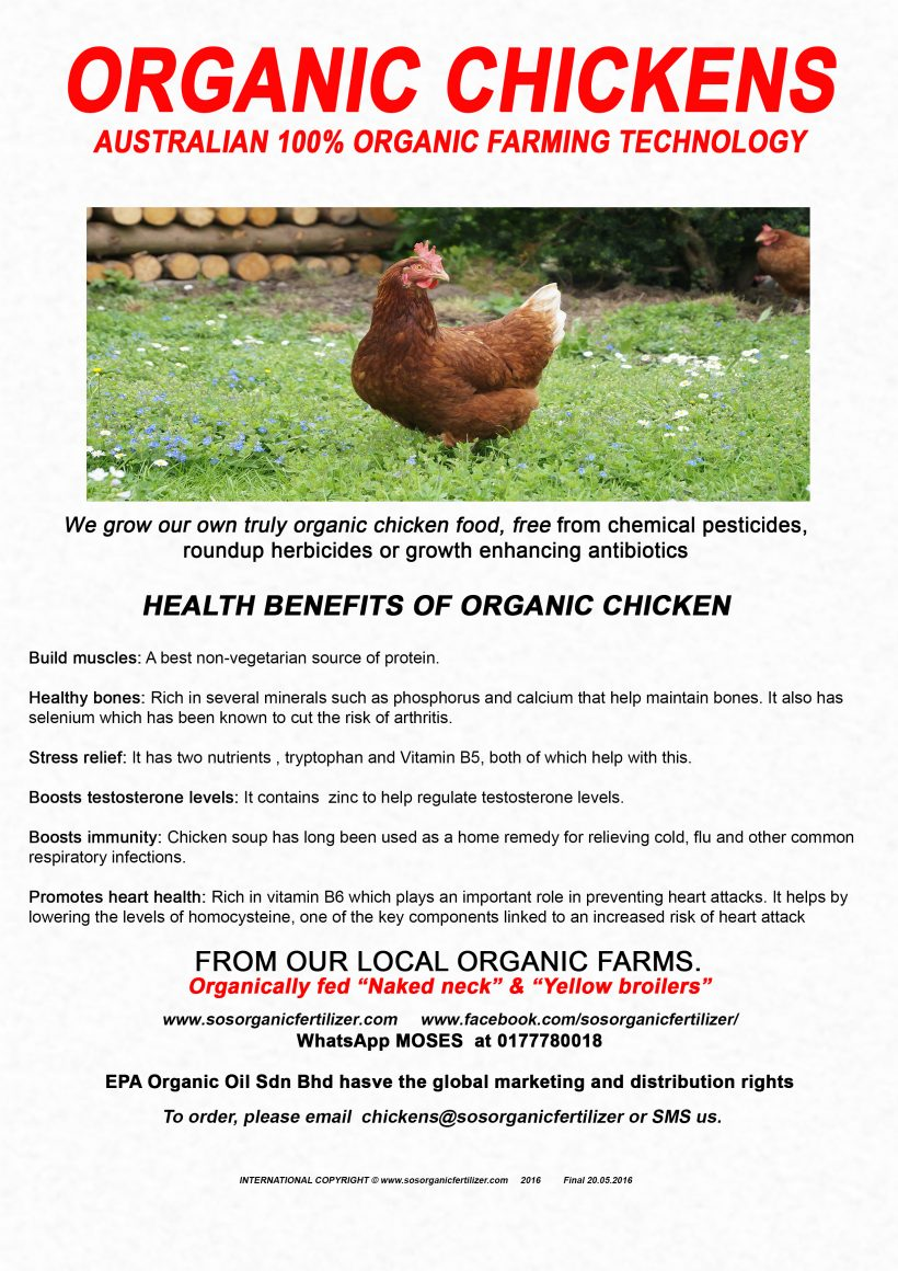 Chicken Brochure
