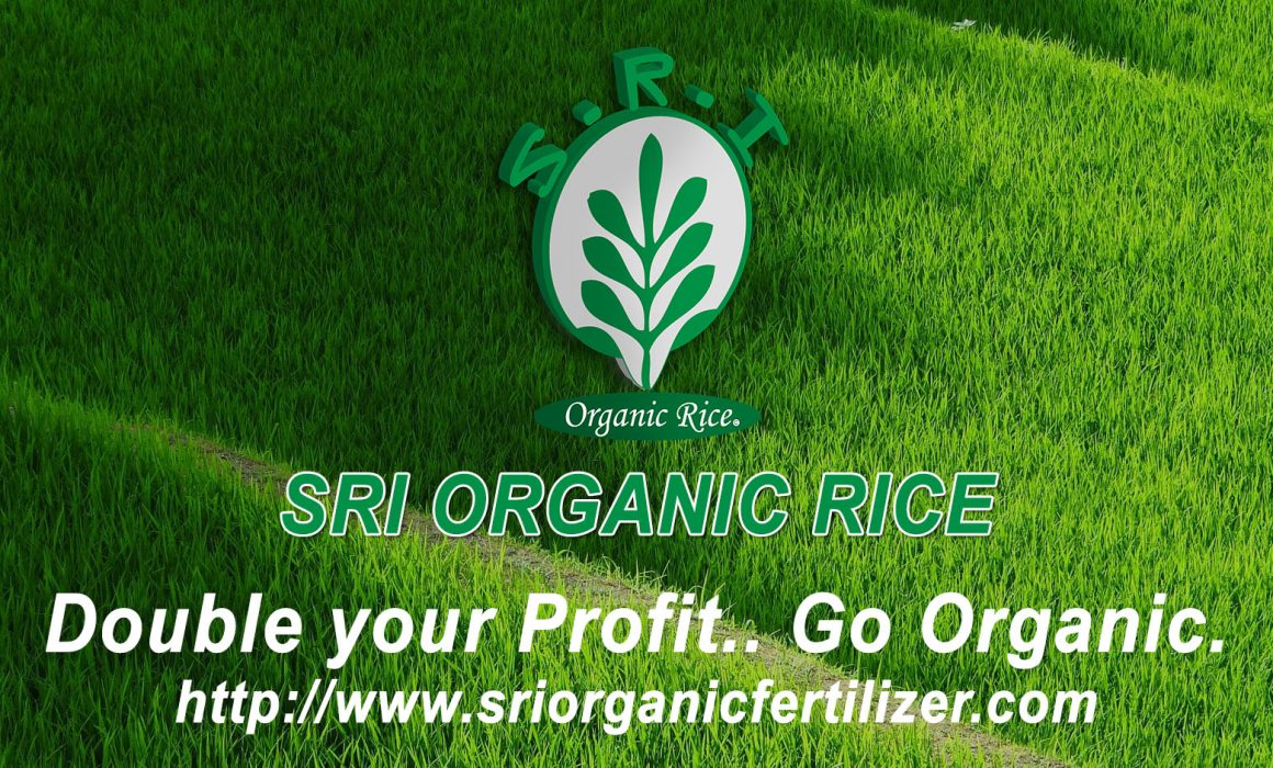 SRI Organic Rice Banner , Double your profit and go organic