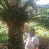 Oil Palm Organic Fertilizer Testimony