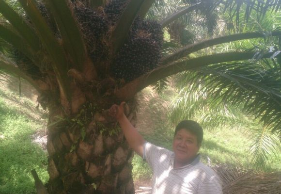 Keningau 28 October Palm Oil  & Flowers Testimony