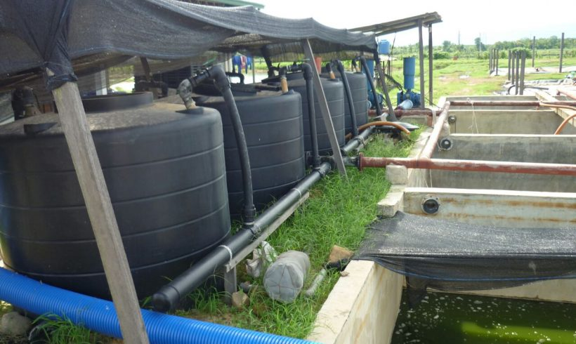 palm-oil-mill-waste-management2