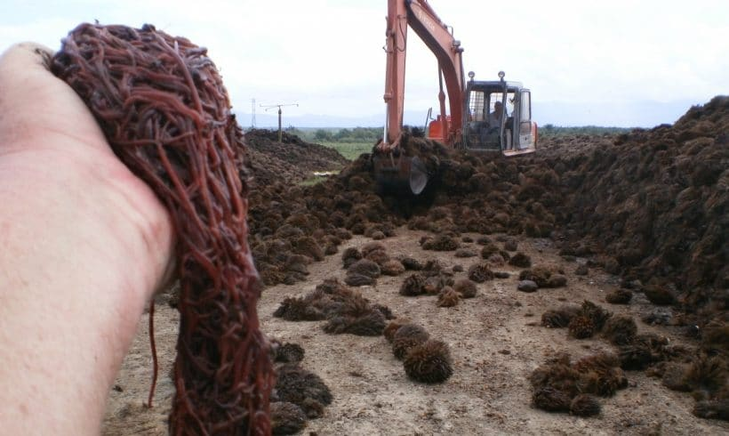 palm-oil-mill-waste-worms7
