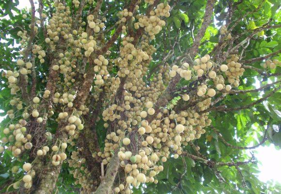 Nun's Orchard Old Papar Road