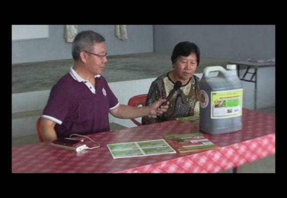 Organic Liquid Fertilizer Testimony Of Kampung Karanaan, Tambunan , Sabah, Malaysia (3)