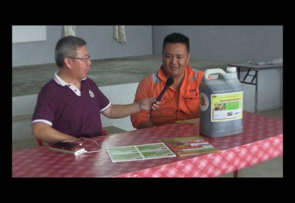 Organic Liquid Fertilizer Testimony Of Kampung Karanaan, Tambunan , Sabah, Malaysia (4)