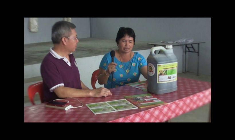 Organic Liquid Fertilizer Testimony Of Kampung Karanaan, Tambunan , Sabah, Malaysia (5)