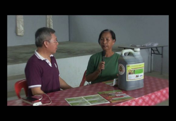 Organic Liquid Fertilizer Testimony Of Kampung Karanaan, Tambunan , Sabah, Malaysia (6)