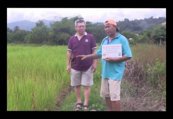 Organic Liquid Fertilizer Testimony Of Kampung Karanaan, Tambunan , Sabah, Malaysia (8)
