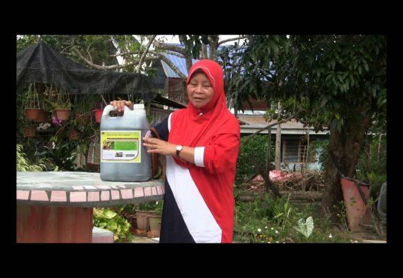 Organic Liquid Fertilizer Testimony Of Kg Merampong, Sabah, Malaysia (1)