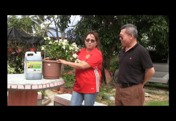 Organic Liquid Fertilizer Testimony Of Kg Merampong, Sabah, Malaysia (5)