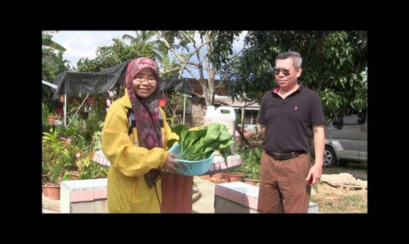 Organic Liquid Fertilizer Testimony Of Kg Merampong, Sabah, Malaysia (7)