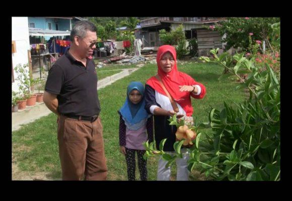 Organic Liquid Fertilizer Testimony Of Kg Merampong, Sabah, Malaysia (8)