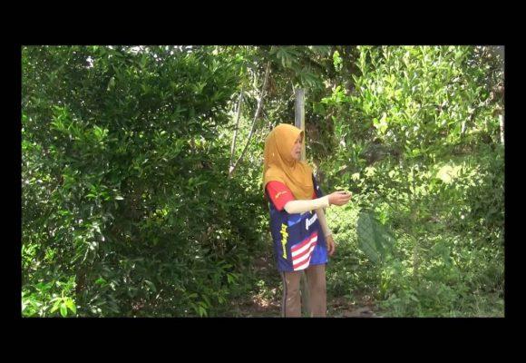 Organic Liquid Fertilizer Testimony Of Kg Merampong, Sabah, Malaysia (9)