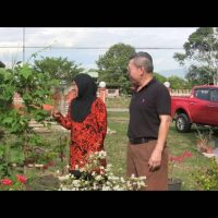 Organic Liquid Fertilizer Testimony Of Kg Merampong, Sabah, Malaysia (11)