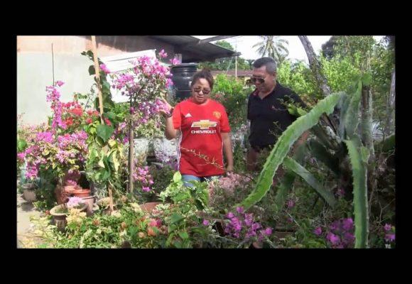 Organic Liquid Fertilizer Testimony Of Kg Merampong, Sabah, Malaysia (13)