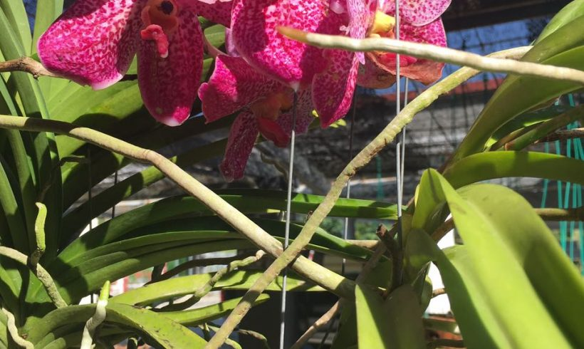 Orchid Flowers Testimonial