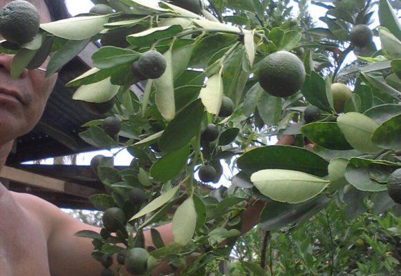 Lime Trees Testimonial