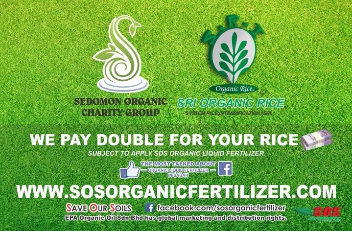 SRI Organic Rice Banner