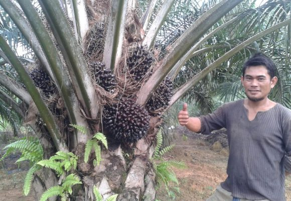 Oil Palm Trees Testimony